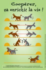 cooperation mieux que conflit